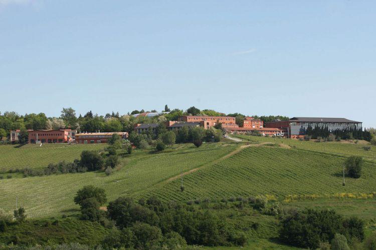 Read more: Invitation to WeFree Days in SanPatrignano